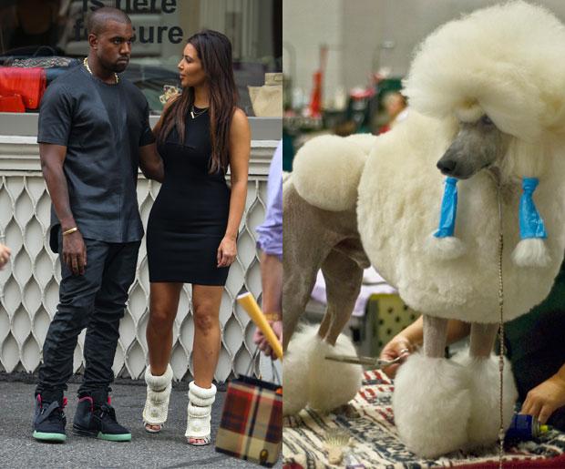 Kim Kardashian Poodle
