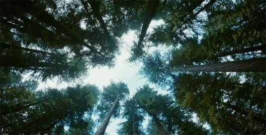 treeoflifetreesoflives.jpg